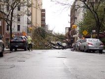 Fallen Tree i den sandiga övreöstliga orkanen för sida NYC Arkivfoto