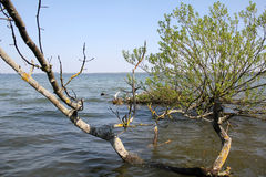 Fallen Tree. Tree in the lake in the sunshine Stock Photos