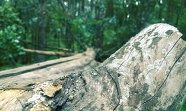 Fallen tree. A large fallen log in the forest Royalty Free Stock Photos
