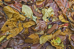 Fallen tree leaves. Beautiful textures of fallen tree leaves Stock Photography