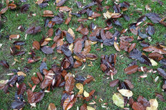 Fallen tree leaves Stock Photo