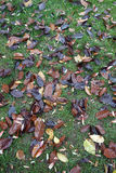 Fallen tree leaves Stock Image