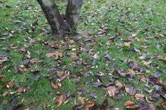 Fallen tree leaves Stock Photo