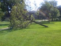 Fallen Tree,  Library Park; Kenosha,  Wisconsin. Fallen tree in middle of park Stock Photo