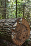 Fallen tree log stock images