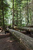 Fallen tree log Royalty Free Stock Photos