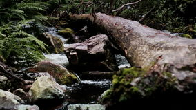 Fallen Tree Log Laying over Boulder Filled Forest River. Static medium long shallow depth of field shot of a fallen tree log laying over a fast streaming Njupan stock video footage