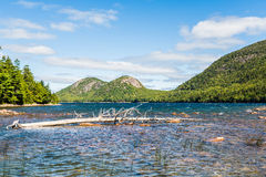 Fallen Tree in Maine River Royalty Free Stock Images