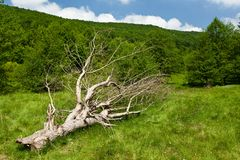 Fallen tree on a meadow Stock Photography