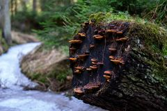 Fallen tree with moss and mushrooms stock photos