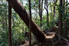 Fallen tree at Ngungun Glass House Mountains National Park Royalty Free Stock Image