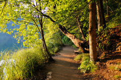 Fallen tree over beautiful forest road Stock Photo