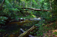 Fallen tree over creek in temperate rainforest Royalty Free Stock Photography