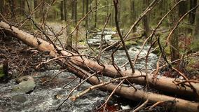 Fallen tree over fast stream. Fallen tree over fast  stream, pure cold water, forest landscape stock footage