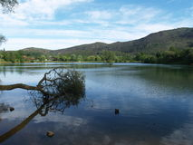 Fallen tree over lake. In Cabarceno, Cantabria, spain Royalty Free Stock Photos