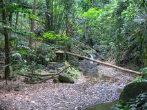 Fallen tree over river in jungle form natural bridge. Thick tropical vegetation without people. Beautiful atmosphere of wild royalty free stock photography