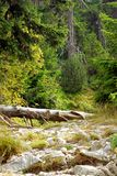 Fallen tree. Royalty Free Stock Photography