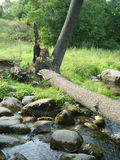 Fallen tree over stream Stock Photo