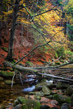 Fallen Tree Over Stream In Autumn Forest Royalty Free Stock Photo