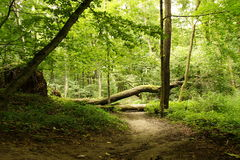Fallen Tree Over The Road Stock Image