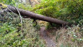 Fallen. Tree over trail Royalty Free Stock Photo
