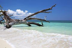 Fallen tree in paradise. Royalty Free Stock Image