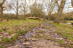 Fallen tree in the park and left to rot. Fallen tree left to rot just in the mud path in the woods and close to the water of the lake Stock Image