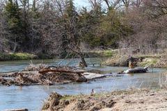 Fallen tree in the platte river Nebraska stock photo