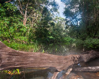 Fallen tree in rain forest water Royalty Free Stock Photos