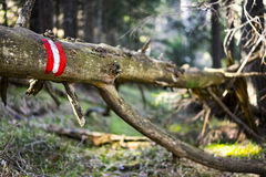 Fallen Tree with Red and White Paint Marker Stock Photo