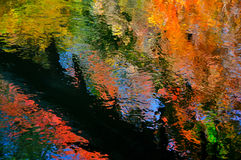 Fallen tree reflected in colorful autumn brook Royalty Free Stock Photos