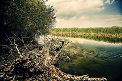 Fallen tree at the river bed Royalty Free Stock Photos
