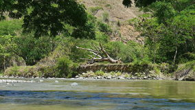 Fallen tree on river bed. With flowing river in the foreground stock video footage