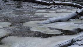 The fallen tree on the river in Lahemma. With the snow caps formed on the river during the winter season stock footage