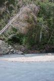 A fallen tree on the riverbank. Riverbank in Valbruna, near Tarvisio, Italy Royalty Free Stock Photos