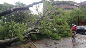 Aftermath of a typhoon or a storm. Royalty Free Stock Photo