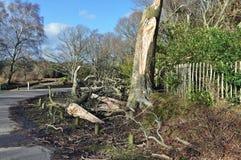 Fallen tree by roadside. Fallen tree near a roadside after a storm over night Stock Photography