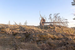 Fallen tree on the rock. Stock Photo