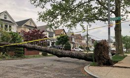 Large Tree Fallen Down Aftermath of Strong Storm Environmental Damage. Large Tree Destruction and Destroyed Aftermath of Strong Storm Environmental Damage stock photo