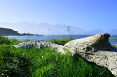 Fallen tree with sea in background and snow mountains. Old fallen tree on the grass with the sea in the background and snow mountains in Kaikoura New Zealand Stock Photo