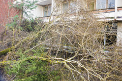 Fallen tree after a severe storm in a residential neighborhood Royalty Free Stock Photography