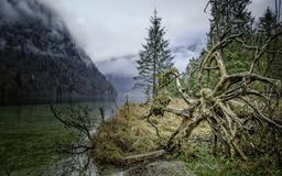The fallen tree on the shore of Koenigssee lake Royalty Free Stock Photos