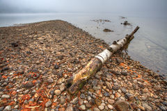 Fallen tree on shoreline. Royalty Free Stock Photos
