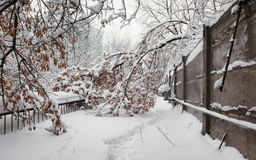 Fallen tree in the snow from the security perimeter Royalty Free Stock Photos