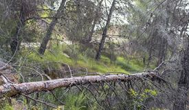 A fallen tree in a spanish forest on a Natural Park in Murcia royalty free stock photo