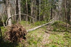 Fallen tree Stock Photography