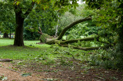 Fallen tree after a storm. Margaret Island, Budapest, Hungary. Fallen tree after a storm. Margaret Island, Budapes stock image