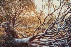 Fallen tree at sunset 2 royalty free stock photo