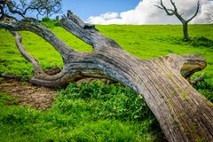 Fallen tree on the top of hill Royalty Free Stock Image