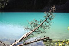 Fallen tree. Tree trunk alling into a turquoise lake Royalty Free Stock Photos